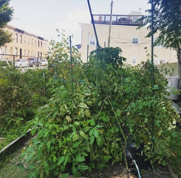 2017 Garden